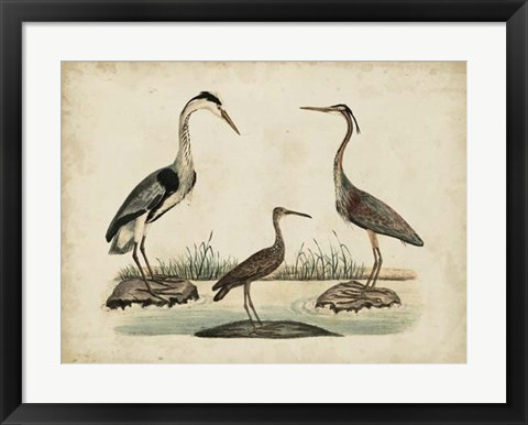 Framed Common Heron & Crested Purple Heron Print