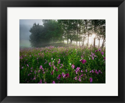 Framed Flower Field Print