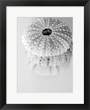 Framed Urchins Print