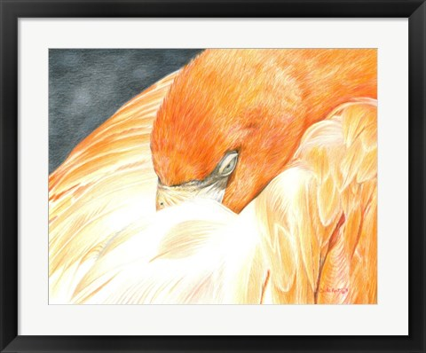 Framed Sleeping Flamingo Print