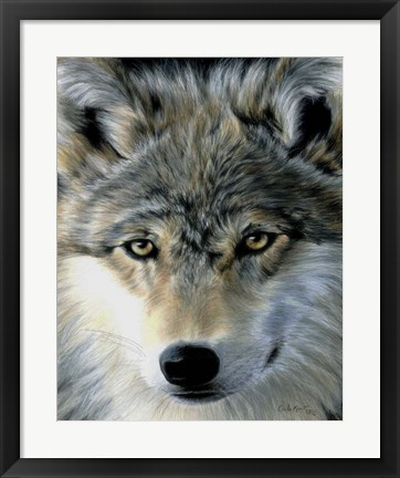 Framed Young Wolf Print