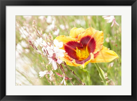 Framed Soft Beauty Print