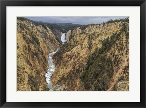 Framed Yellowstone Grand Canyon - Lower Falls Print