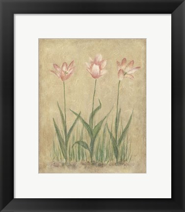 Framed Blooming Tulips II Print