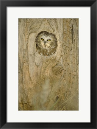 Framed Owl Head Peaking out of Tree Print