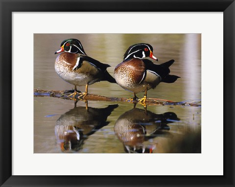 Framed Identical Birds in Water Print