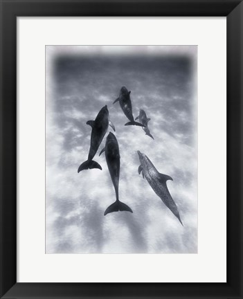 Framed Black and White Dolphins Swimming Print