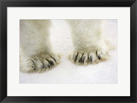 Framed Polar Bear Paws Print