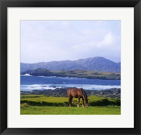 Framed Single Brown Horse in Field Print