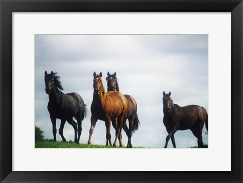 Framed Horses Against a Storm Sky Print
