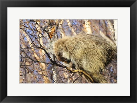 Framed Furry Critter in Autumn Tree Print