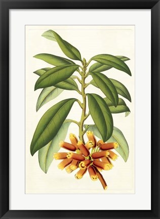 Framed Tropical Rhododendron I Print