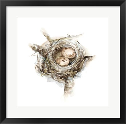 Framed Bird Nest Study I Print
