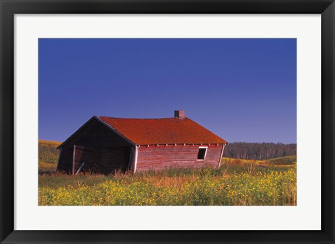Framed Old Red Barn in Flower Field Print