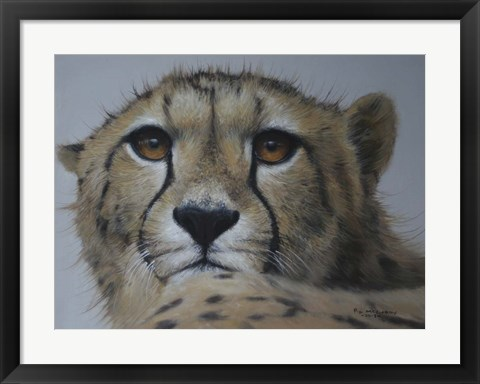 Framed Cheetah Study Print