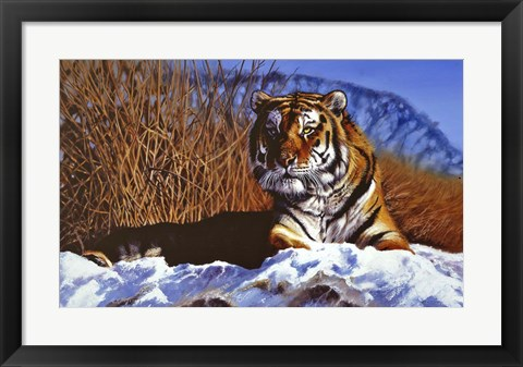 Framed Siberian Tiger In Snow Print