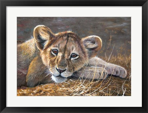 Framed Young Lion Resting Print
