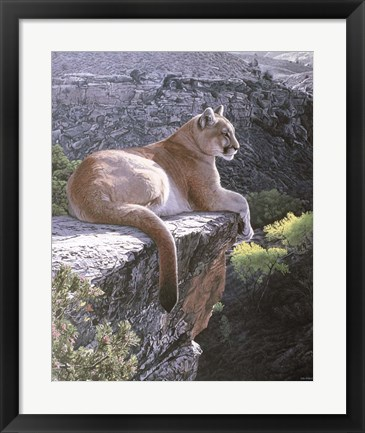 Framed Cougar Country Print