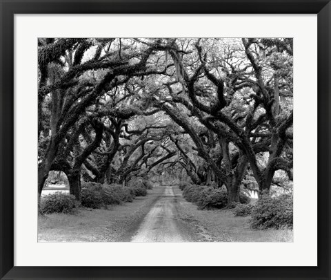 Framed Path In The Oaks #2, Louisiana Print