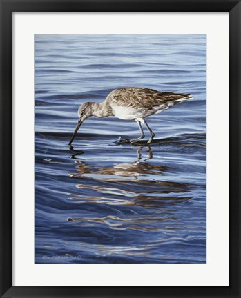 Framed Willet Print