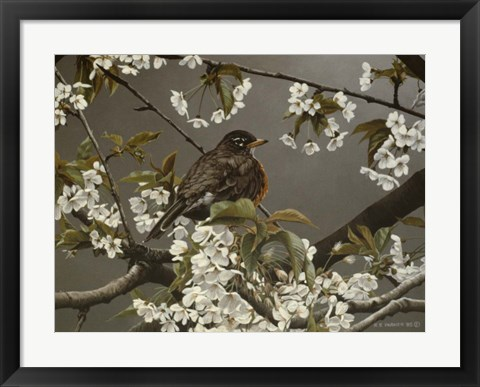 Framed Cherry Blossoms 2 Print