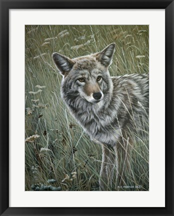 Framed Coyote In The Grass Print