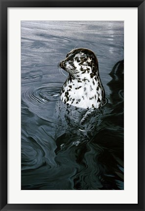 Framed Harbor Seal Print