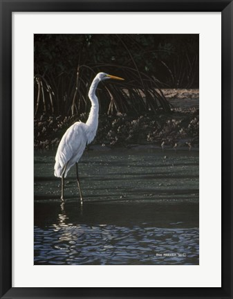 Framed Great Egret Print