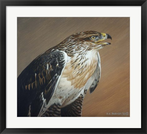 Framed Ferruginous Hawk Print