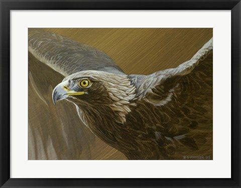 Framed Golden Eagle Print