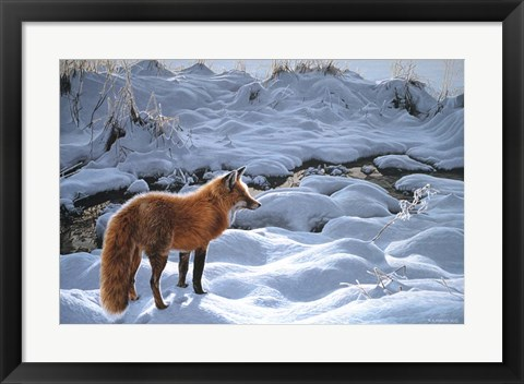 Framed Icy Morning- Red Fox Print