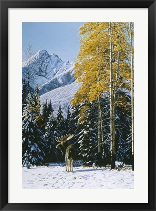 Framed Trembling Aspen Print