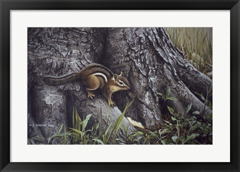 Framed Wary Glance Print