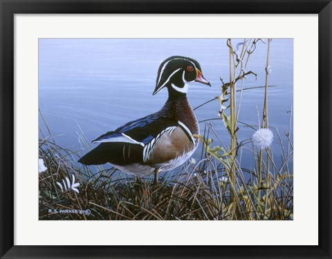 Framed Duck At Waters Edge Print
