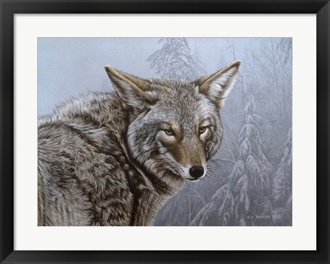 Framed Coyote Portrait Print
