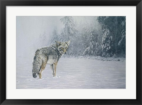 Framed Coyote In Snow Print