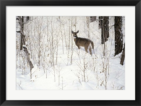 Framed Deep Snow- Whitetail Print