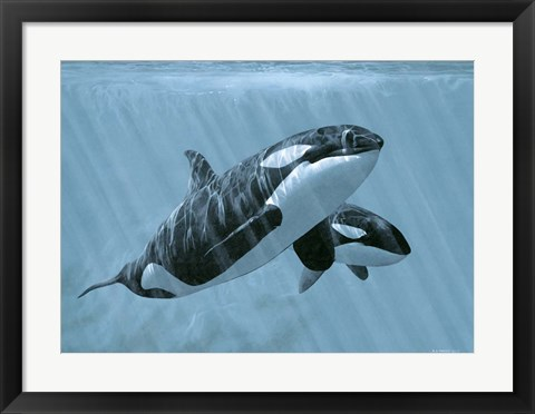 Framed Mother And Son- Orcas Print