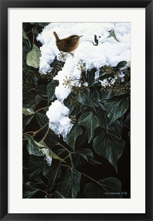 Framed Winter Wren On Ivy Print