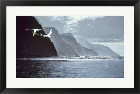 Framed White Tailed Tropic Birds Print