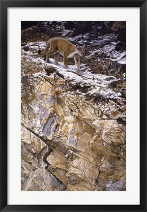Framed On The Edge Print