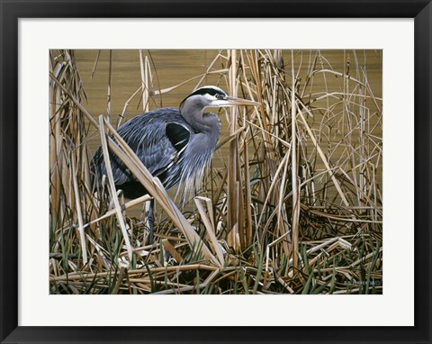 Framed Early Spring - Great Blue Heron Print