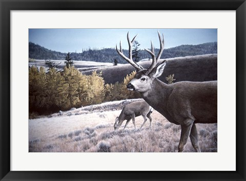 Framed Mule Deer In Aspen Print
