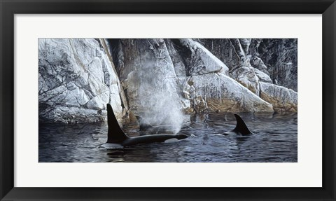 Framed Deep Water- Orcas Print