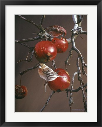 Framed Winter Apples Print