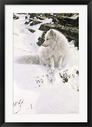 Framed Blue Shadows - Arctic Fox Print