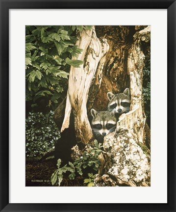 Framed Raccoon Pair Print