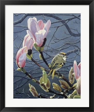 Framed Kinglet And Magnolia Print