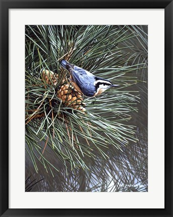 Framed Nuthatch On Pine Cone Print