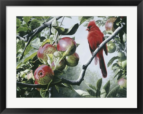 Framed Cardinal And Apples Print